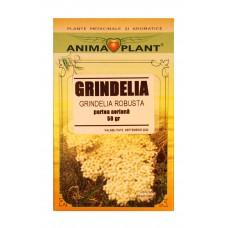Grindelia, Grindelia robusta, aerial part, small plant, tea plant, 50 g