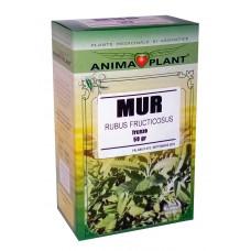 Blackberry, Rubus fruticosus, leaves, small plant, for tea, 50g