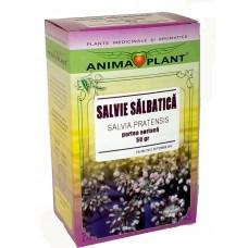 Wild sage, Salvia pratensis, aerial part, small plant, for tea, 50 g