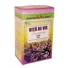 Vine, Vitis vinifera, leaves, small plant, for tea, 50g